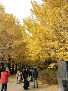 昭和記念公園 いちょう橋から